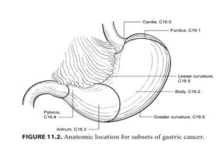TCGA临床病理资料详细解读